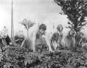 Schüler im Einsatz zur Bekämpfung des Kartoffelkäfers um 1950; Foto: Bundesarchiv