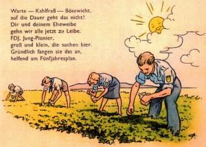 Kartoffelkäfer-Einsatz in der DDR (Propaganda-Plakat)