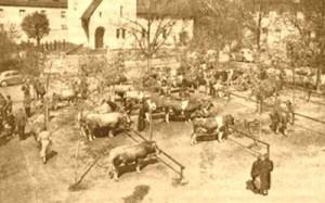 Viehmarkt um 1935 in Adenau